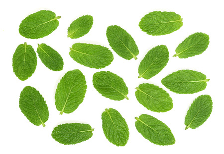 mentha: mint leaves on white background Stock Photo