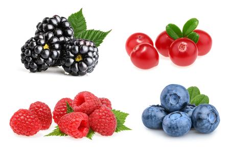 mountain cranberry: Set of beautiful fruits ( blackberries, cranberries, raspberries, blueberries)