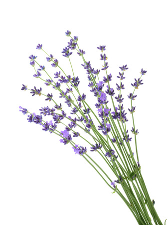 lavander isolated without shadow Stock Photo
