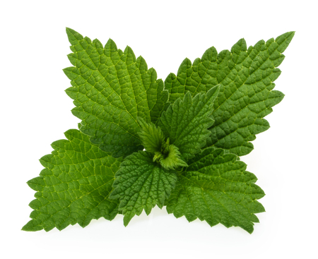 Nettle isolated on white background Banque d'images - 95459192