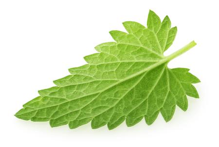 Back side of lemon balm melissa leaf isolated on white