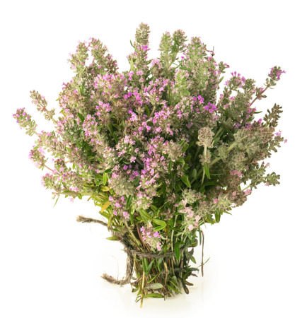 Wild Thyme (Thymus serpyllum) isolated on white background