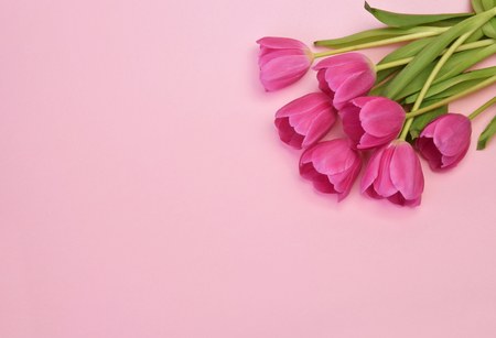 spring flowers banner - bunch of burgundy tulip flowers top view