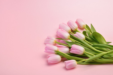 spring flowers banner - bunch of pink tulip flowers top view
