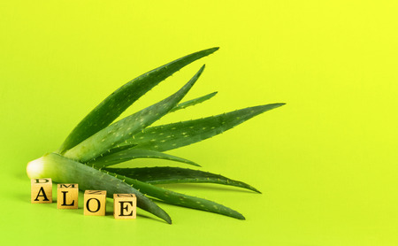 Aloe vera plant with copy space Reklamní fotografie