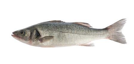 poisson bar isolé sur fond blanc Banque d'images