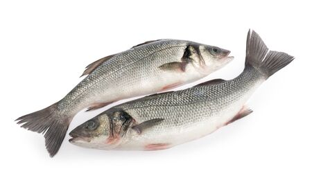 seabass fish isolated on white background Stockfoto