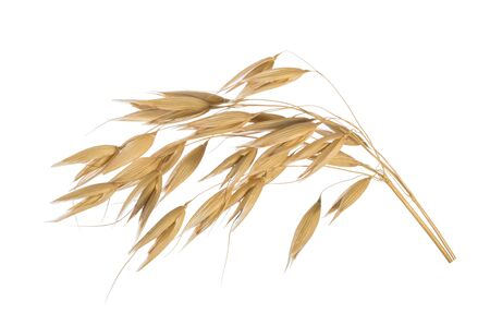 Oat plant isolated on white without shadow Reklamní fotografie