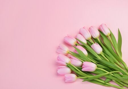 pink tulip flowers with copy space