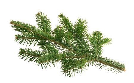 Fir tree isolated on white background Imagens