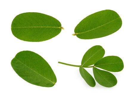 peanut leaf isolated white background Stock fotó