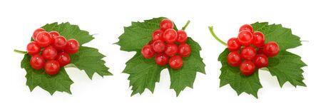 Red berries of Viburnum (arrow wood), isolated on white Stock fotó
