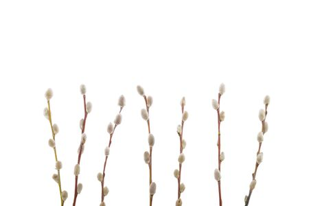 Willow twigs isolated on white background. without shadow Stock fotó