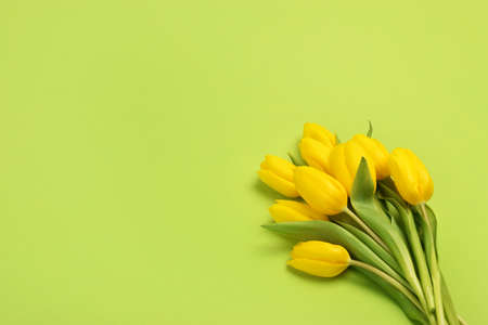 spring flowers banner - bunch of yellow tulip flowers top view