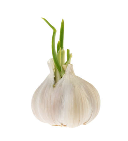 Garlic isolated on white background without shadow Banque d'images