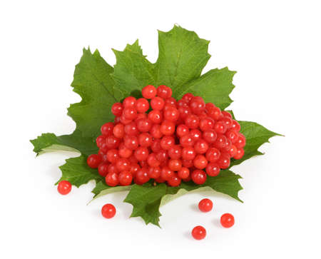 Red berries of Viburnum (arrow wood), isolated on white Banque d'images