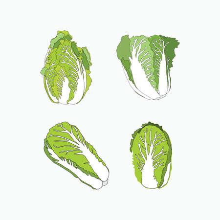 chinese cabbage set - hand drawn vector illustrations for food cartoon logo Ilustracja