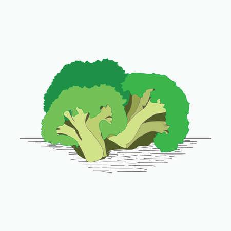 broccoli slice - vegetable flat illustration for vegan concept Ilustracja