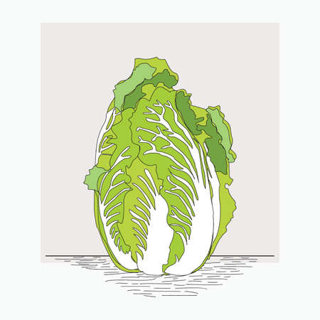 chinese cabbage - hand drawn vector illustrations for food cartoon logo