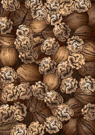 hard crust: Hand Drawn Walnuts Texture Illustration