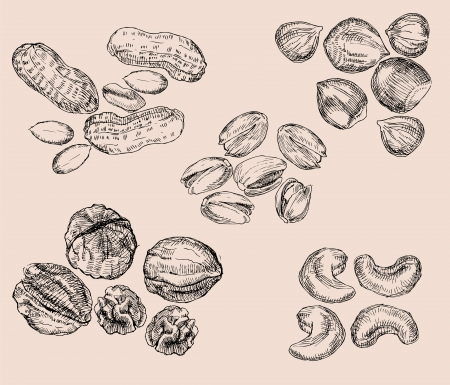 etched: Hand Drawn Nuts Illustration