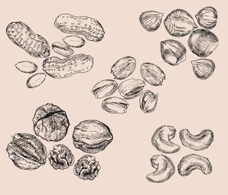 Hand Drawn Nuts Illustration