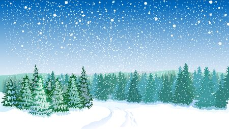 snowfall: Winter landscape with spruce trees and snowfall Illustration