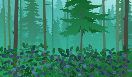 blueberries: Forest Landscape with spruce trees and blueberries