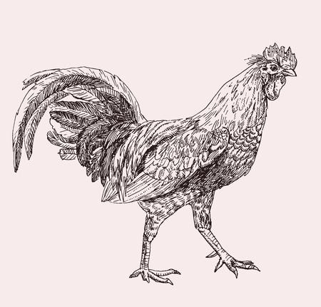Hand drawn illustration of cock Illustration