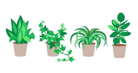 Flache Zimmerpflanzen Vektorgrafik. Set Pflanzen in Töpfen