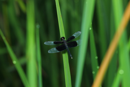 Dragon Fly Dragonfly on the Grass photo