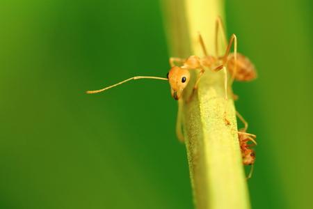 terrestrial mammal: ants Stock Photo