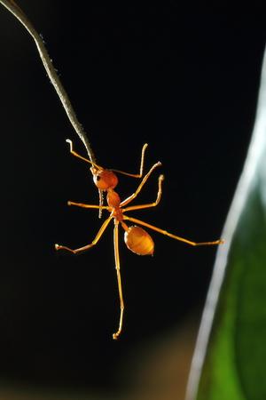 ants: ANTS Stock Photo