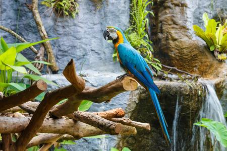 guacamaya: Macaw loro, guacamayo, loro.