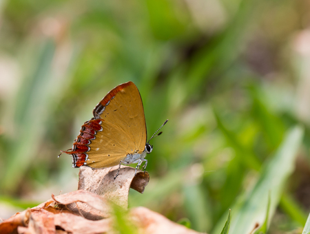 Butterfly, moths, insects, nature.