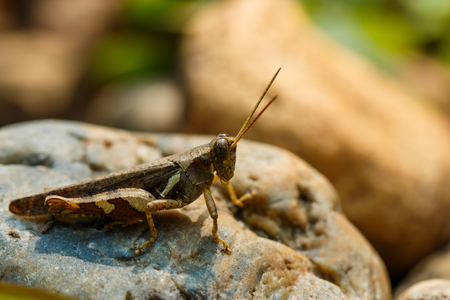 Grasshoppers, insects, nature.