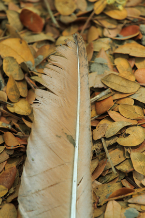 hornbill: Feather,Feather bird,nature.