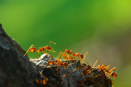 Ant, insect. Stock Photo