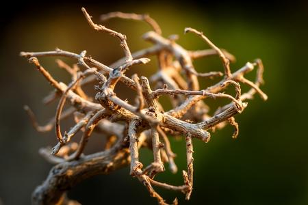 bough: Dry twigs