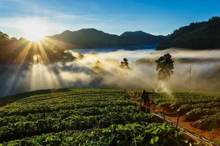 Landscape,nature,Morning light,View of morning mist at strawberry field of Doi Ang Khang,Chiangmai Province,Thailand. 免版税图像