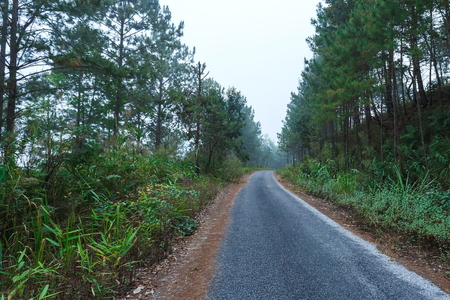 Roads in the forest,landscape,Nature of thailand Doi Sun Juh Fang, Chiang Mai. Stock Photo