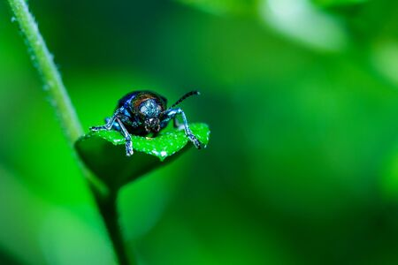 Scarab,insect,bug,Leaf insects. Stock Photo