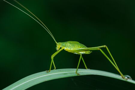 eye close up: Insect, grasshopper. Stock Photo