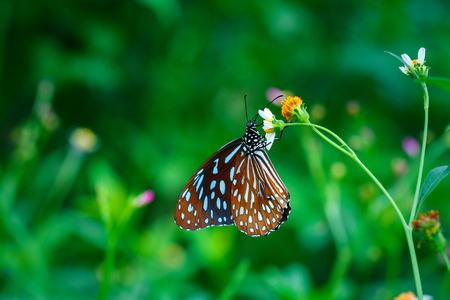 butterflies ,bug, butterfly, insect.