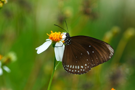 insecta: butterflies ,bug, butterfly, insect.