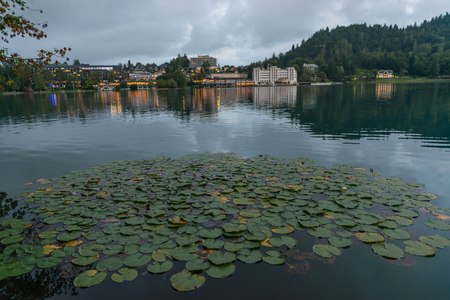 Green leaves of water lilies on the calm surface of the water on the background of evening lights in the windows of city buildings