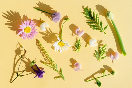 a variety of wild flowers, daisies, Lupin, onion and grass, flat paper yellow background, Botanical pattern, hard light