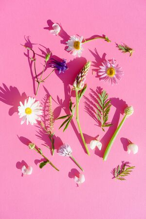 a variety of wild flowers, daisies, Lupin, onion and grass, flat paper pink background, Botanical pattern, hard sunlight