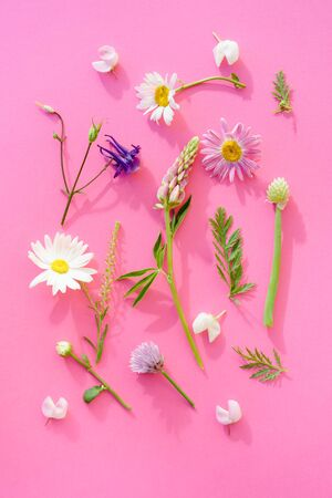 a variety of wild flowers, daisies, Lupin, onion and grass, flat paper pink background, Botanical pattern Stock Photo