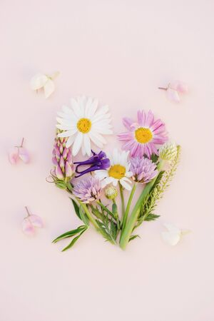 a variety of wild flowers, daisies, lupine, onions and herbs, a flat bouquet in the form of a heart on a paper pink background, Botanical pattern. Stock Photo